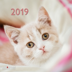 Calendrier 2019 chats