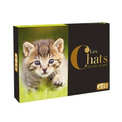 Coffret calendrier chevalet 365 photos de chats*