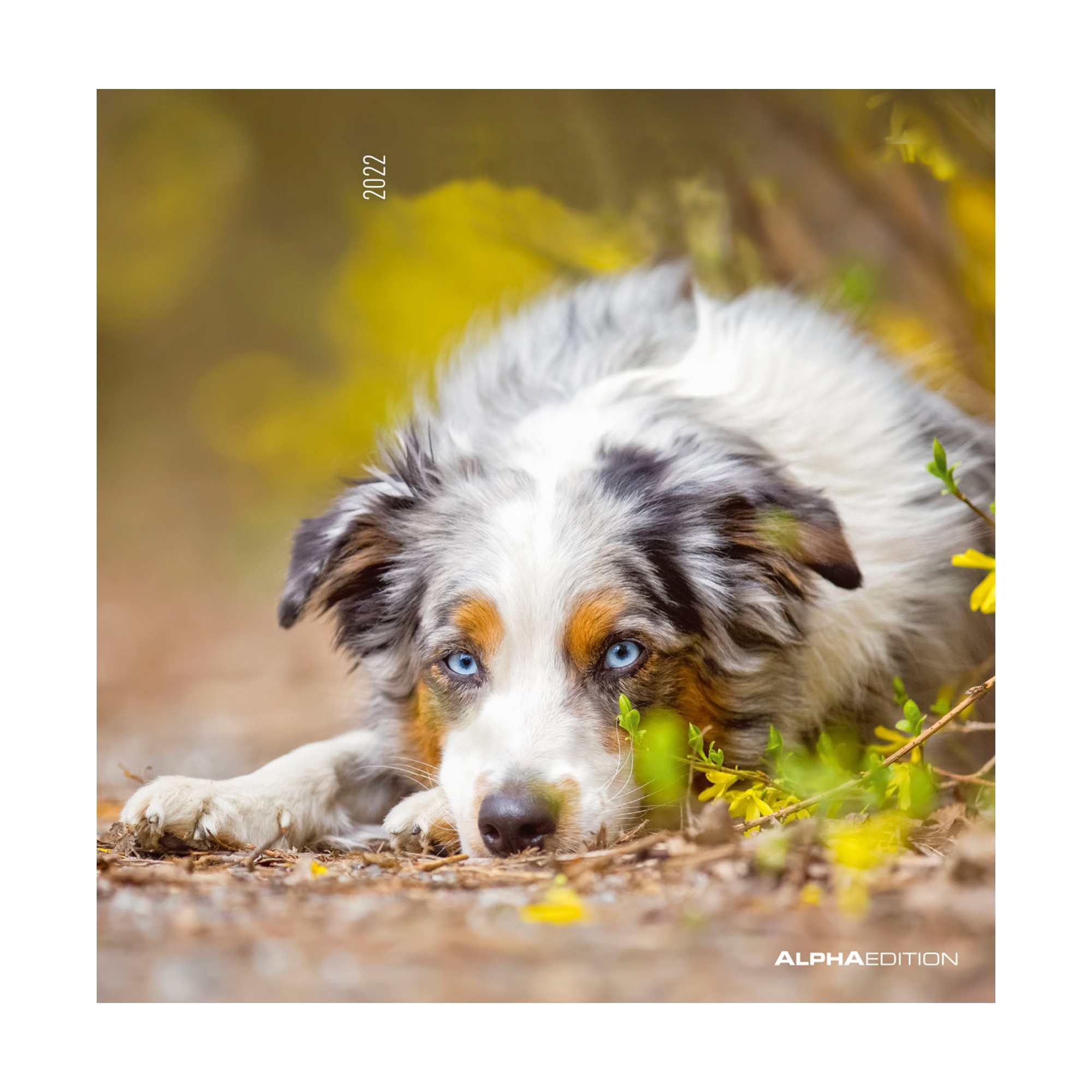 Calendrier 2020 Animaux.Calendrier 2020 Chiens Blancheporte
